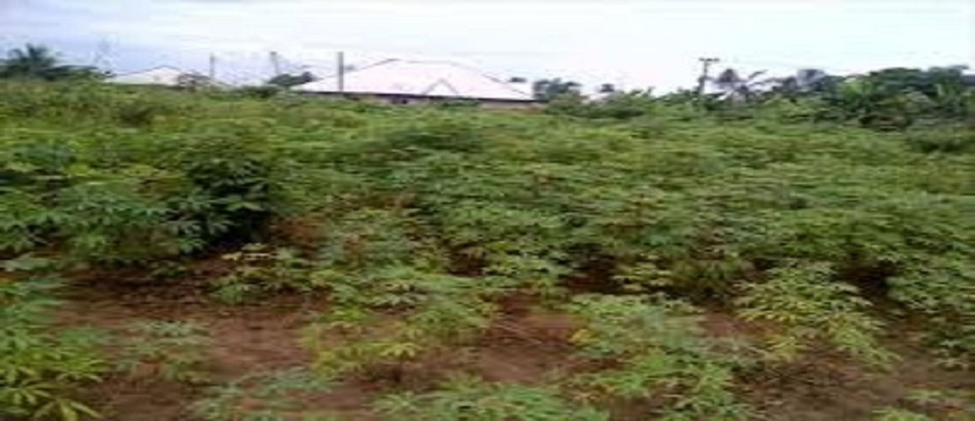 Land For Sale @ Shimawa Road Back of Deeper Life Camp